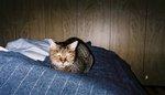 tora_mar15_2005.jpg